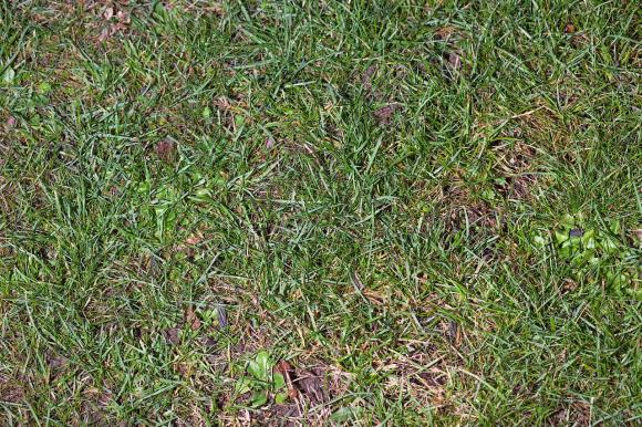 gräsmatta