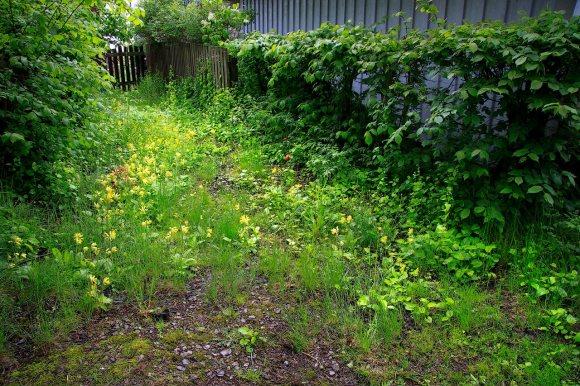 vildträdgård_28