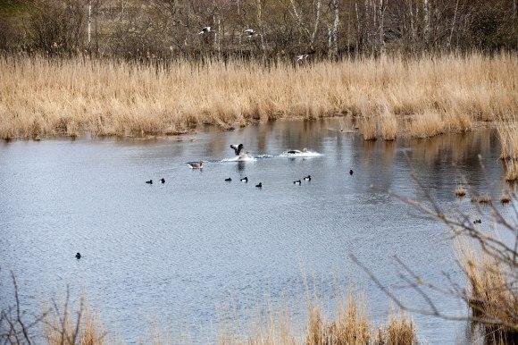 fågelsjön_2