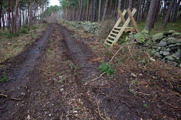 Cykelväg_Albrunnaskogen_25