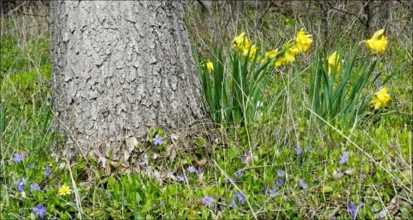 träd_blomma