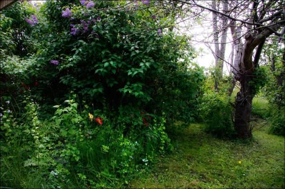 trädgård_03