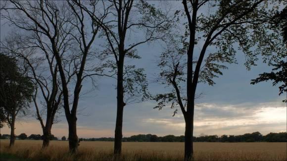 döda-träd_32
