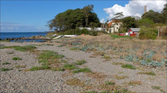 SödraBruket_stranden_1