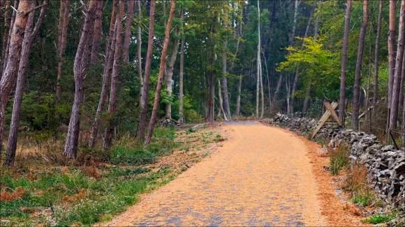 cykelvägen_barr