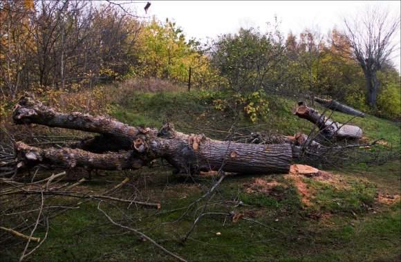 trädfällning_Södrabruket__4