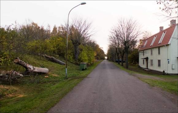 trädfällning_Södrabruket__7