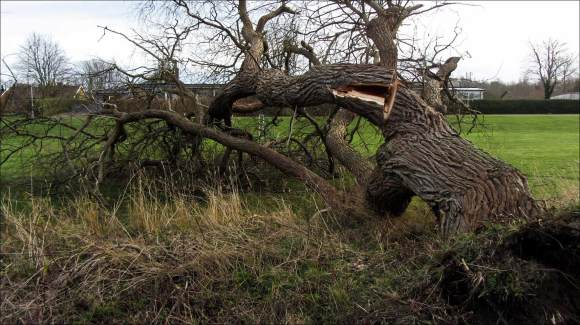 Gorm_trädfällning_Dalsjö_3