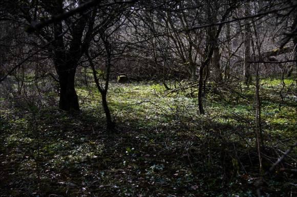 Albrunna lund_08