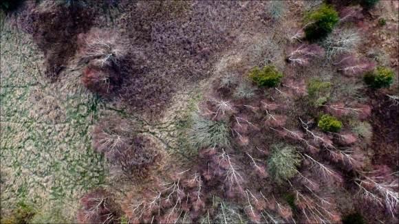 vi-flyger-över-skog
